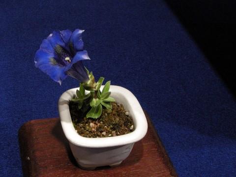 Wow Nice Companion plant