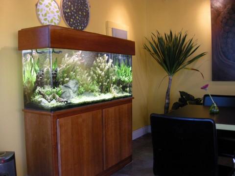 fish-tank-at-the-whole-bowl-dscn3402